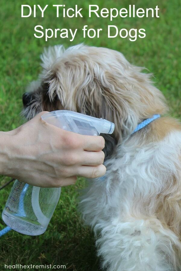 All Natural DIY Tick Repllent Spray for Dogs - We haven't seen one tick since we started spraying our dog with this natural DIY tick repllent spray. #diy #diytickrepllent #ticks #tickrepellent #naturaltickrepellent #allnatural #naturalpet #pets #dogs
