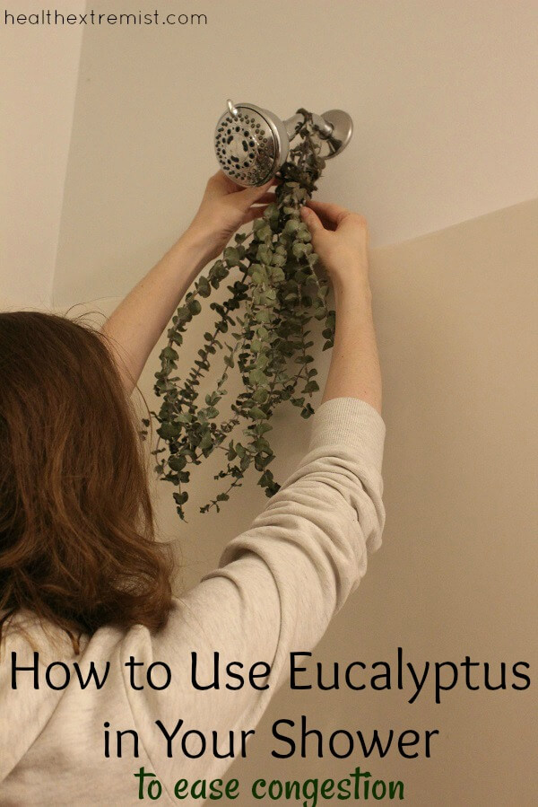 How to Use Fresh Eucalyptus in the Shower to Ease Congestion. Hanging fresh eucalytpus in the shower can help clear your nasal passages, reduce asthma and sinusitis.