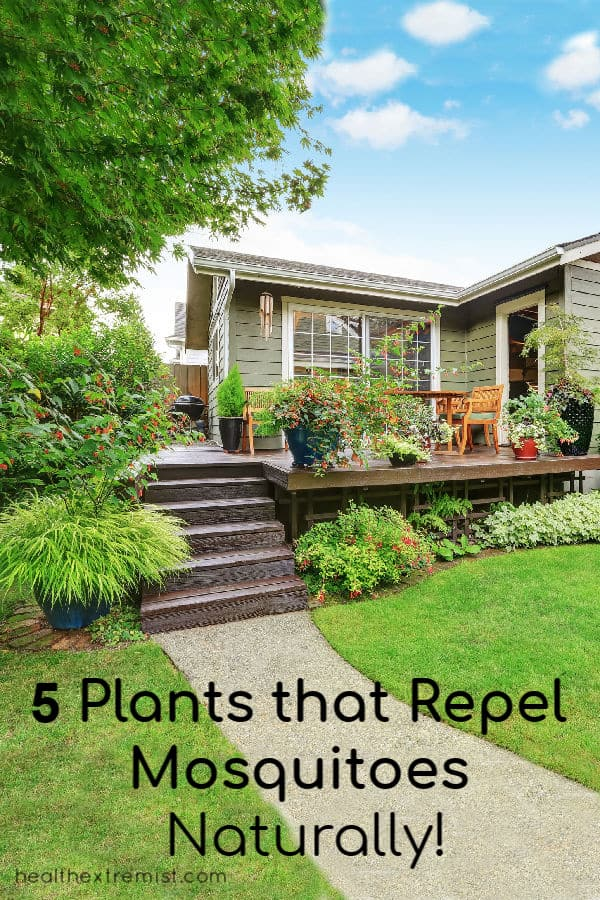 House with plants in backyard and on deck with text overlay - 5 plants that repel mosquitoes naturally